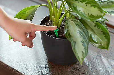 2 PACK Indoor Plant 48-Spikes,