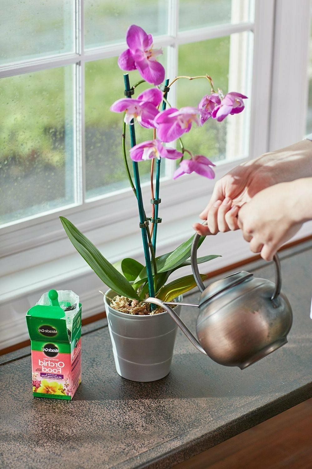 miracle gro orchid plant food orchid fertilizer