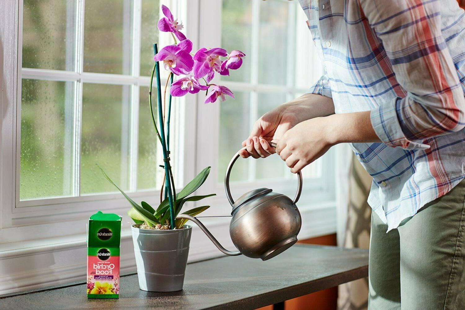 Miracle Gro Food Orchid Rich Leaf Color
