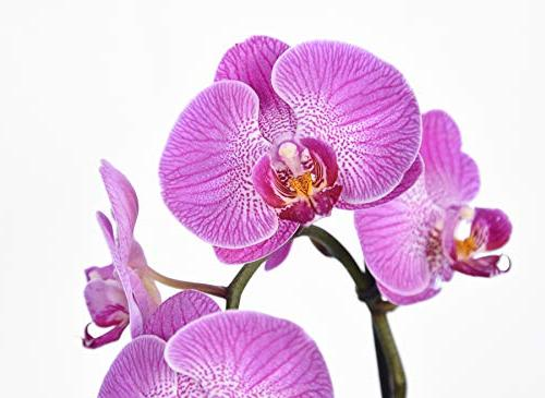 Orchid Food Plants Slow Fertilizer, Bag for Types and Other