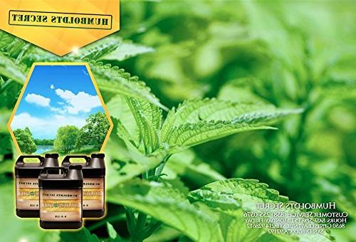 Best Plants Growth, Yield Flowers, Fruit, Tomatoes,