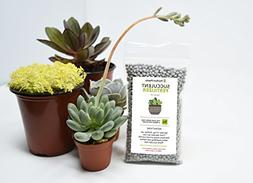 Succulent Fertilizer by Perfect Plants — Light Rate, Slow